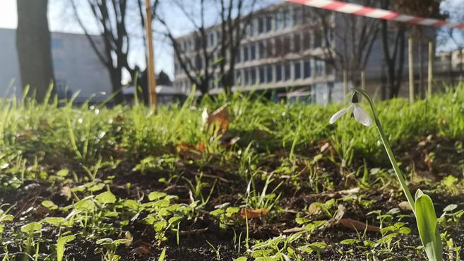 Le collège République passe au vert par la végétalisation de sa cour. #EDD